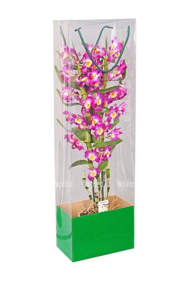 Коробка для Орхидей