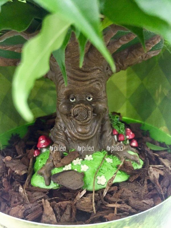 Фикус Бенджамина «Сказочное Дерево»