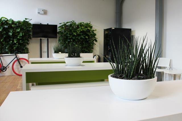 Растения для офиса купить