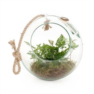 Купить Флорариум Папоротник в подвесном шаре