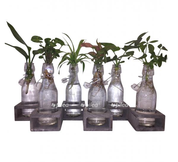 Купить Растение Гидро