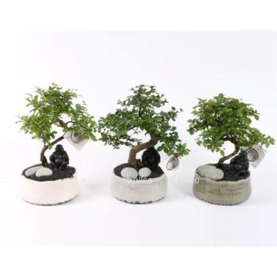Купить Бонсай микс в керамике с Буддой