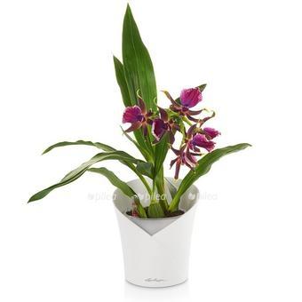 Купить Кашпо Lechuza для растений ORCHIDEA