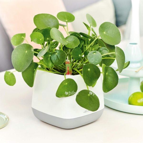 Купить Кашпо Lechuza для растений YULA