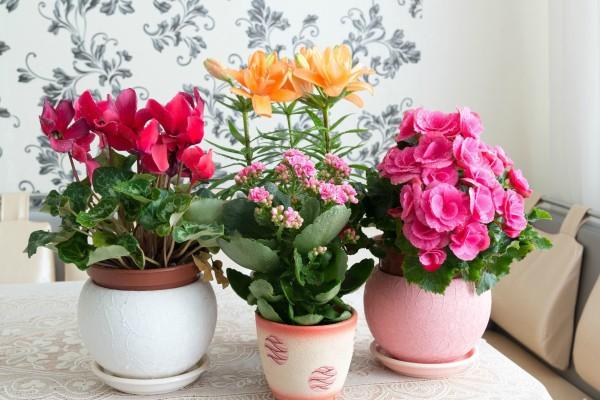 Комнатные растения для школы