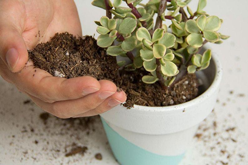 Как пересаживать комнатные растения?