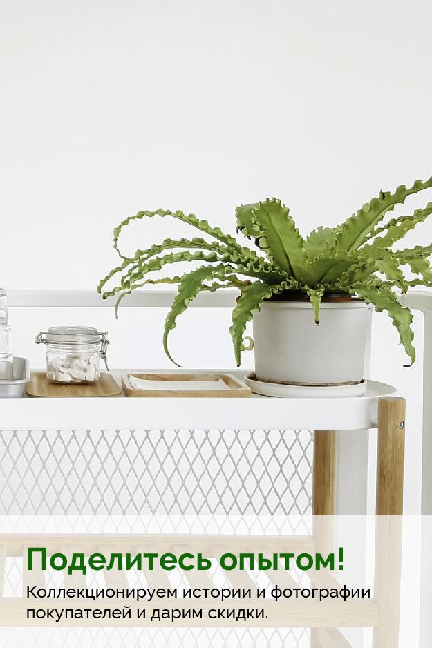 Акции и скидки на комнатные растения в Pilea