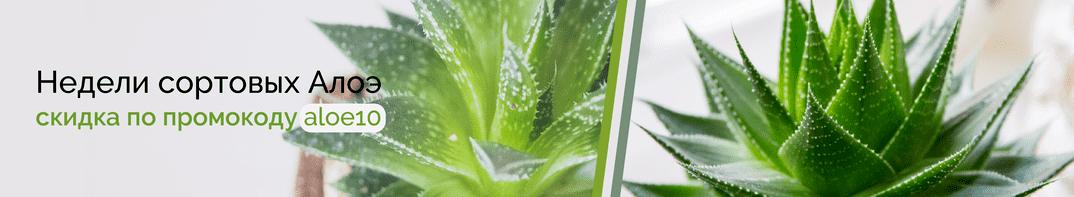 Комнатные растения Алоэ купить