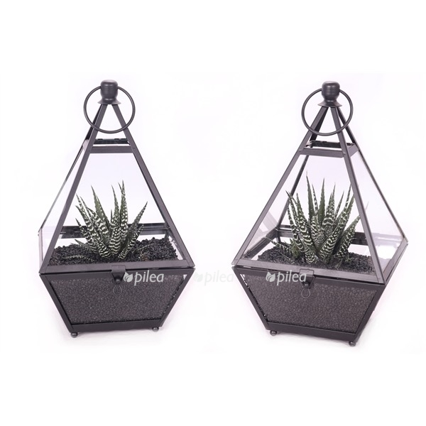 Флорариум «Суккулент в стекле»