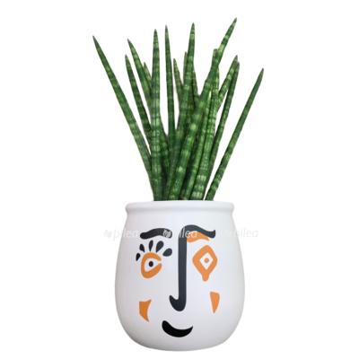 Купить Сансевиерия Цилиндрика Литтл Лизард в керамике