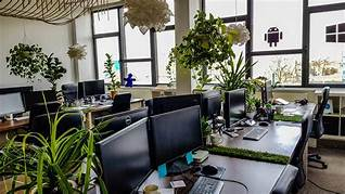 Растения в горшках в офисе