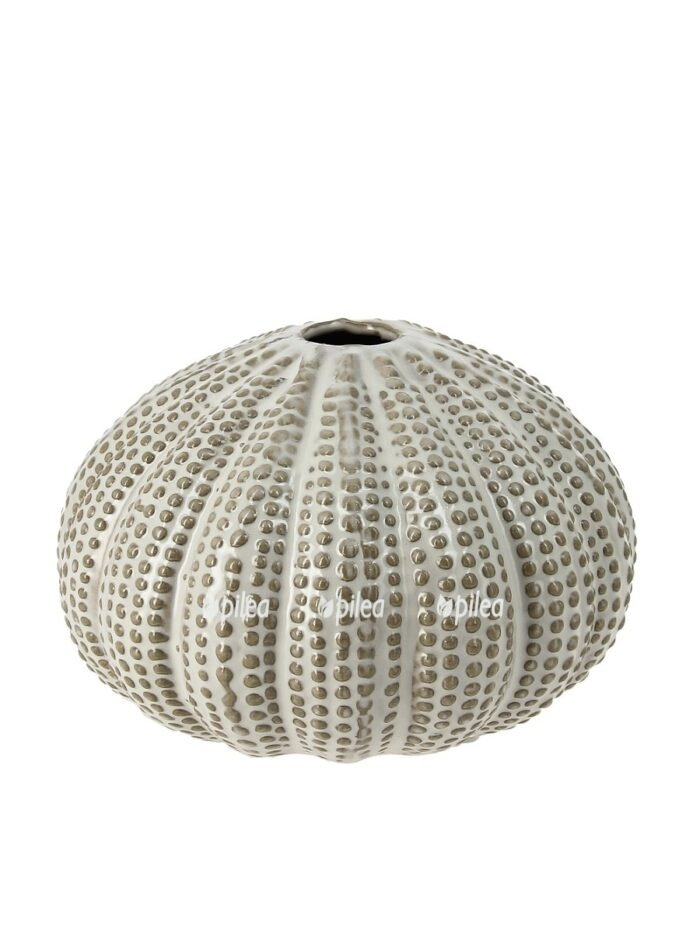 Ракушки сферические
