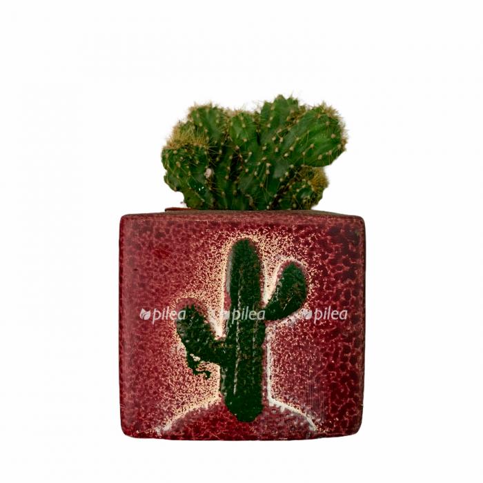 Купить Кактус Микс в керамике