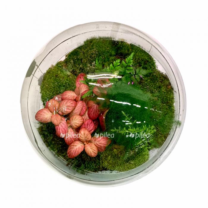 Купить Флорариум с экосистемой